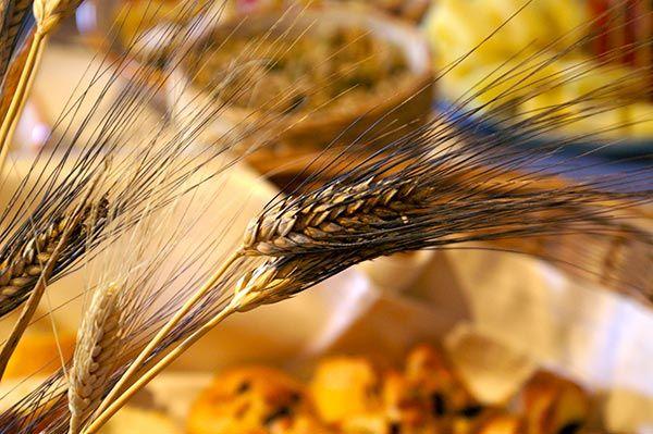 Organizzazione eventi - Spiga di grano siciliano