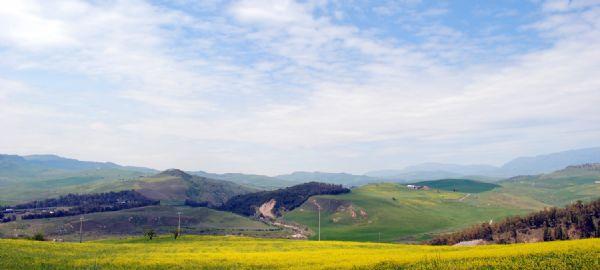 Campo di grano che si affaccia sulla valle del fiume Imera